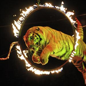 Цирки Шигон